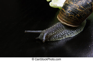 snail on a table scrolling