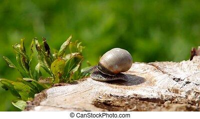 Snail on a tree stump