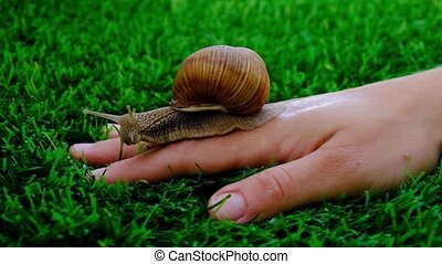 Snail on a woman hand,natural cosmetic,beauty skin care . High quality 4k footage