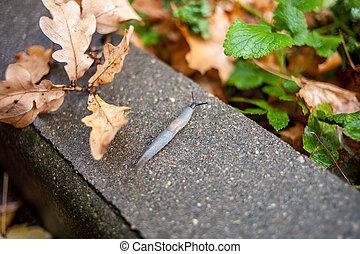 Snail on autumn leaves
