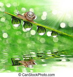 Snail on dewy grass