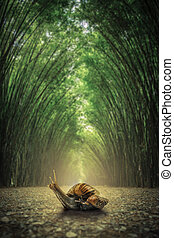 Snail on floor. The path flanked by two sides with no bamboo forest background .