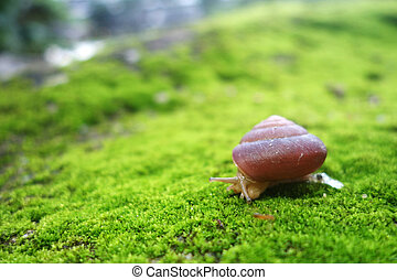 Snail on forest moss