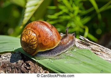 Snail on grass-blade 16