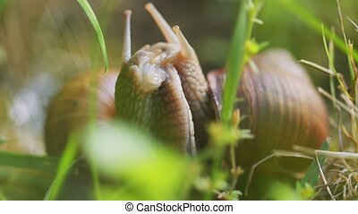 Snail on ground level closeup photo