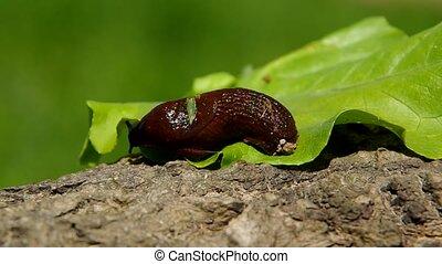 Snail on leaf green salad