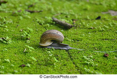 snail on moss ground