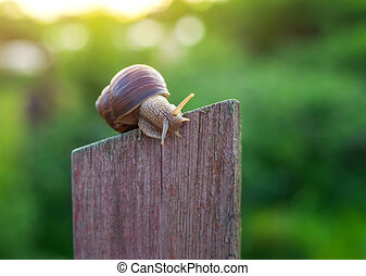 Snail on old Wooden Fence and the green background