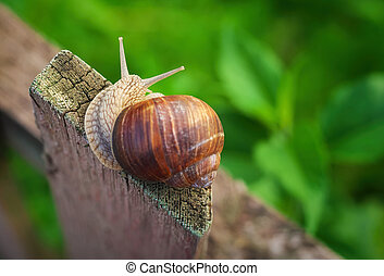 Snail on old Wooden Fence and the green grass. View from above