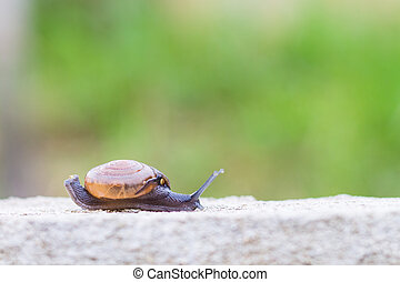 Snail on the concrete wall