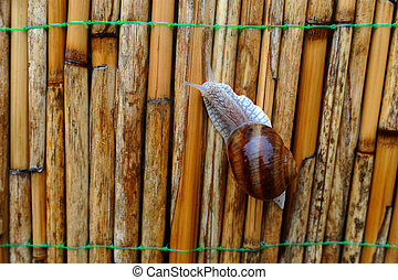 snail on the fence of reeds