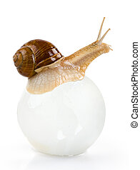 Snail on the glass ball isolated. Clipping path
