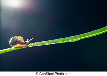 snail on the leaf against black background