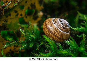 Snail on the moss