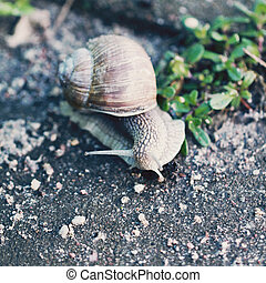Snail on the road close up photo
