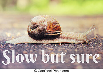 Snail on the road toned vintage style with text