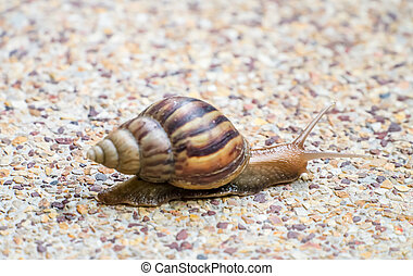 Snail on the stone floor