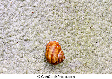 snail on the wall