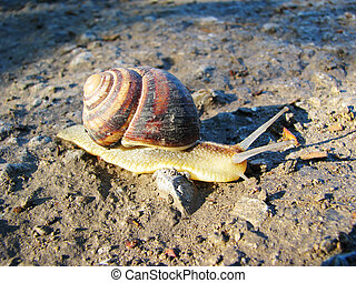 Snail on the white background.