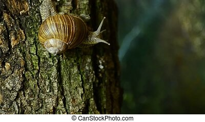 Snail on tree wildlife. Snail on a tree in the forest. 9