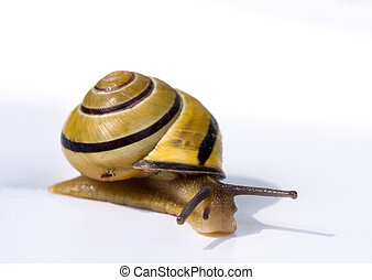 Snail on white background