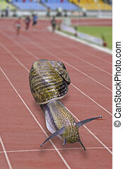 Snail running on track