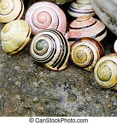 Snail shell still life