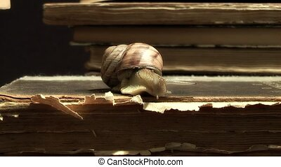 Snail, - shellfish