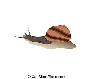 Snail. Side view on a white isolated background. Vector illustration.