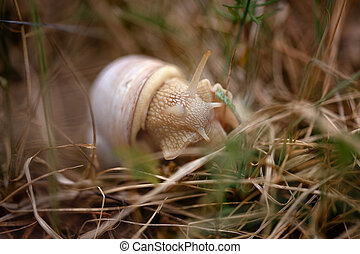 Snail sitting in the grass