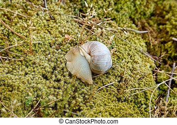 Snail sitting on the moss surface