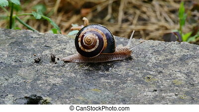 snail slides across 4k