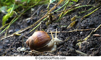 snail sliding on the ground at the park 4x Increased video...
