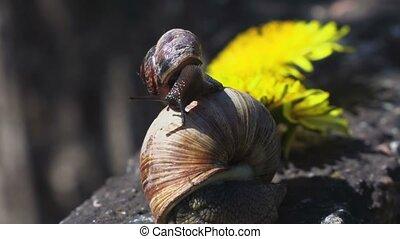 Snail slime on other snail