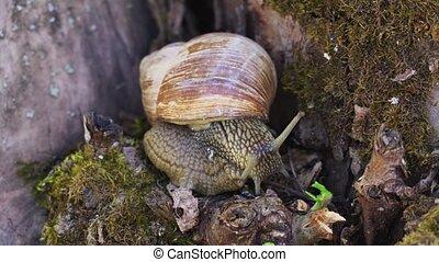 Snail slime on tree