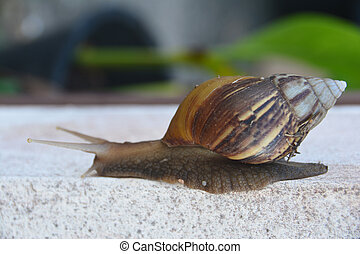 Snail slowly move on the wall