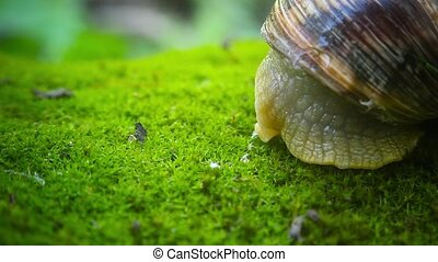 Snail slowly revealed - snail opens slowly before...