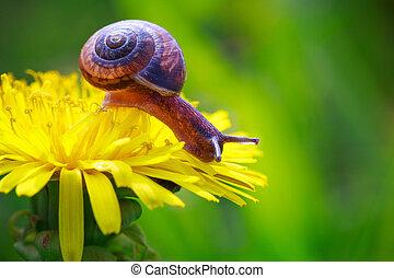 Snail - snail crawling on a flower