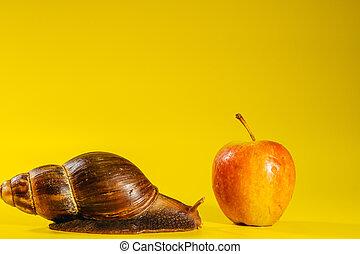 Snail. Snail eats a red apple.