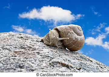 snail under blue sky