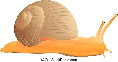 snail vector design