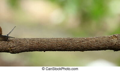 Snail walking on a limb - close up Snail walking on a limb