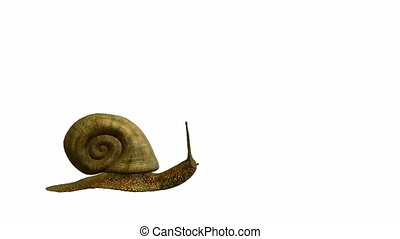 Snail walking on a white background