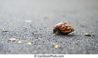 Snail walking on the asphalt floor.
