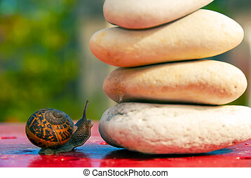 snail was hesitating over an obstacle