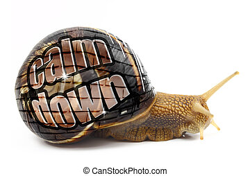 "Snail with ""Calm Down"" message on its shell isolated"