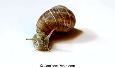 Snail with shell on bright background