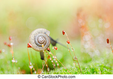 Snails and moss macro shot in the garden or forest
