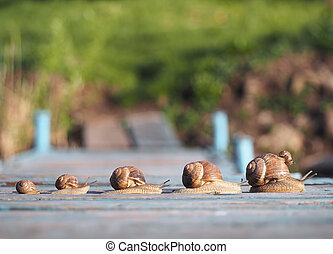 Snails family trip racing in one row