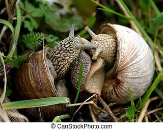 Snails love-1